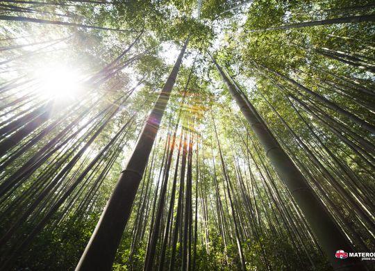 bamboo-forest-grass-54601 (1)